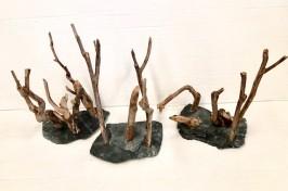 Shrimp Forest